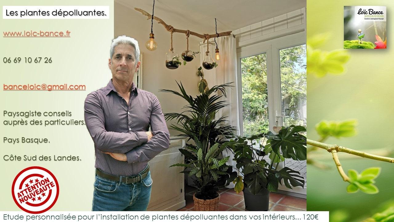 Les-plantes-depolluantes-etude