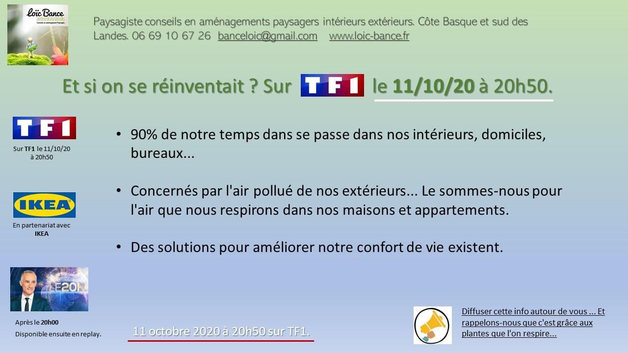 Paysagiste-Pays-Basque-Paysagiste-Landes-Paysagiste-plantes-depolluantes-TF1
