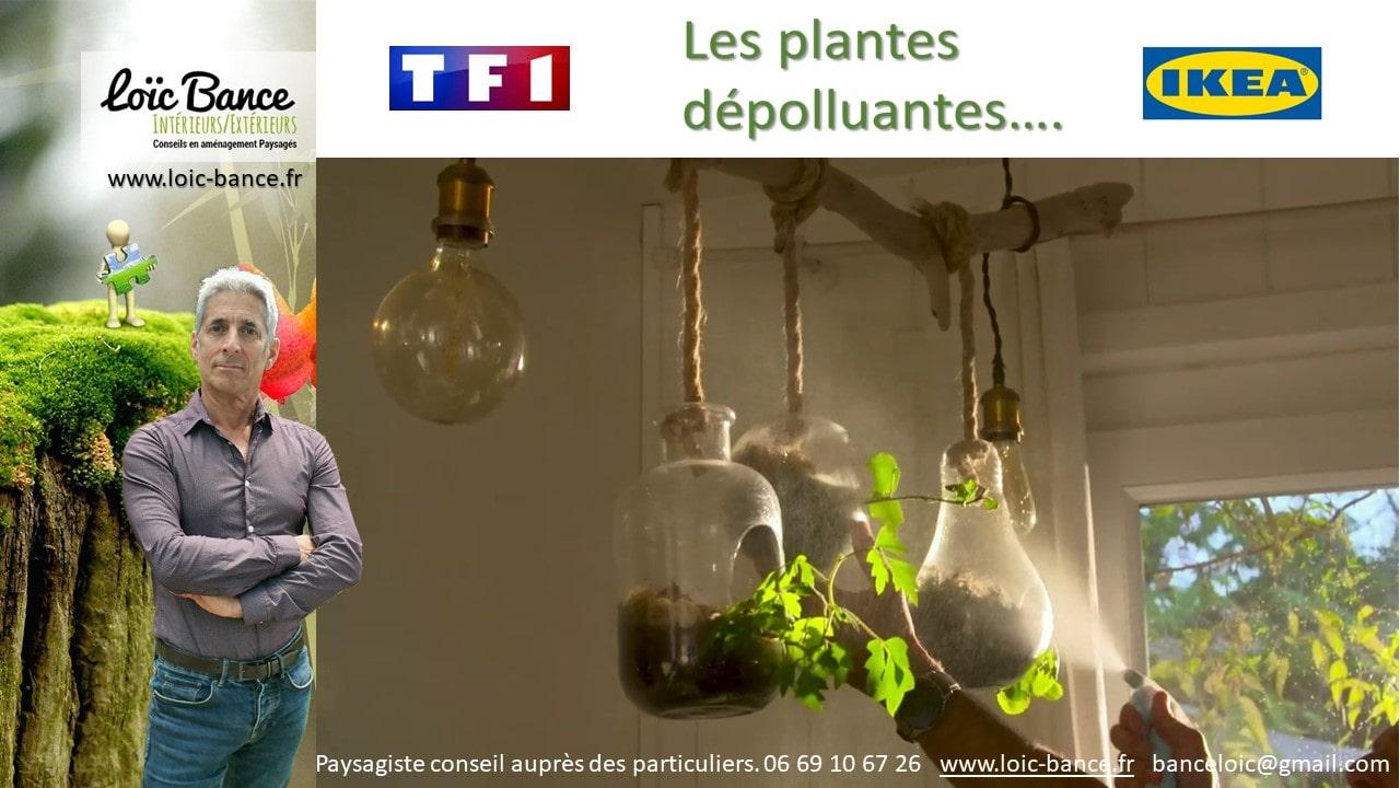 Paysagiste-Plantes-depolluantes-Loic-BANCE